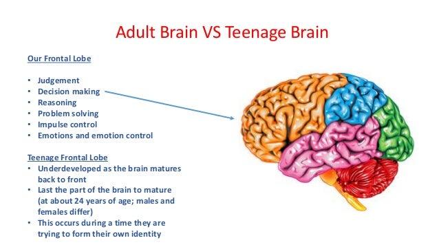 Adaptability of the adolescent brain essay