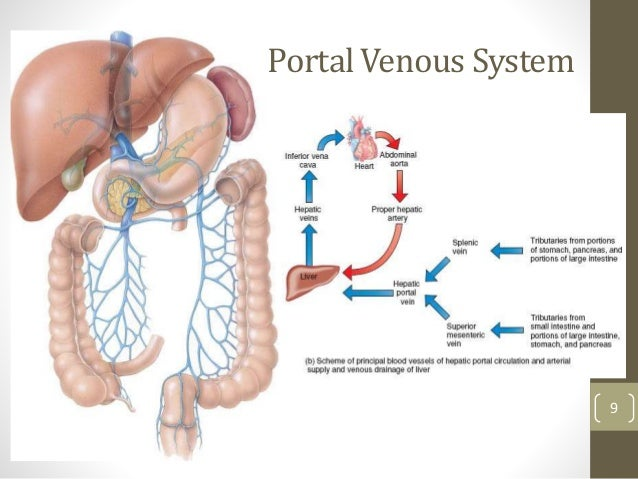 blood supply of git pdf
