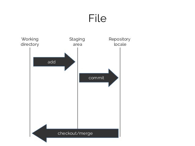 File Working directory Staging area Repository locale add commit checkout/merge