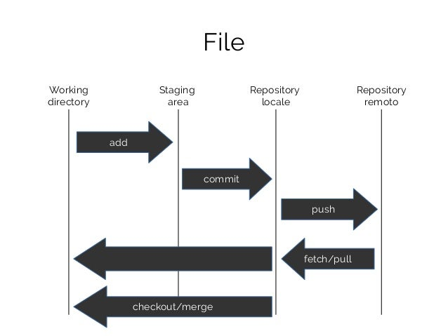 File Working directory Staging area Repository locale Repository remoto add commit push fetch/pull checkout/merge