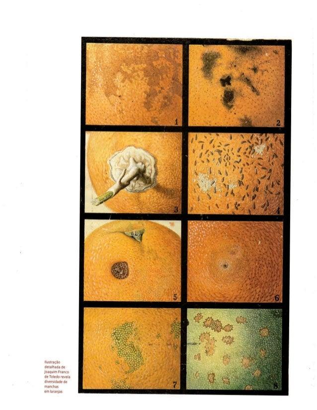 Revista Pesquisa FAPESP - Catálogo do acervo de ilustradores do Museu do IB