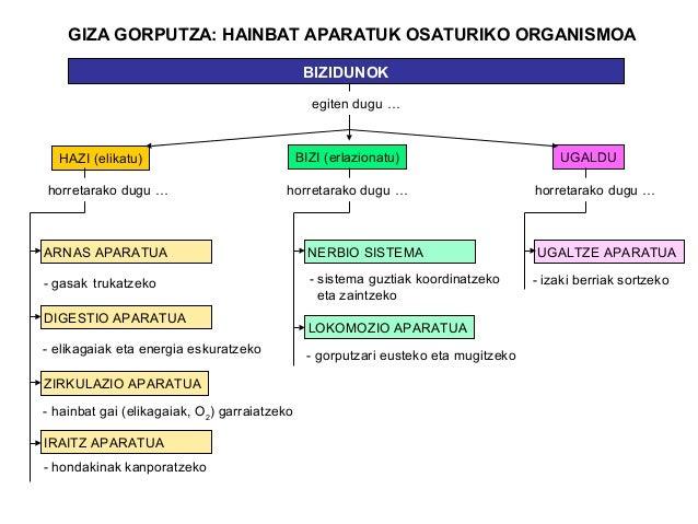 GIZA GORPUTZA: HAINBAT APARATUK OSATURIKO ORGANISMOA                                               BIZIDUNOK              ...