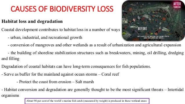 Biodiversity Loss Causes