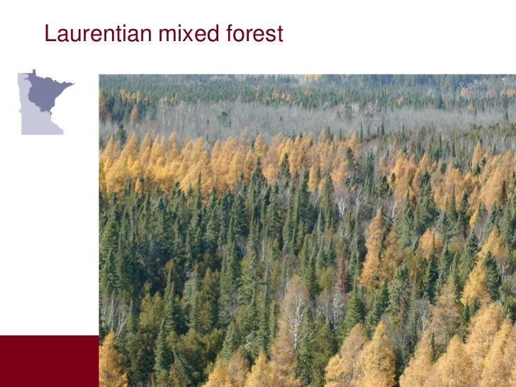 Laurentian mixed forest         Aspen         Parklands                      Laurentian                      Mixed Forest ...