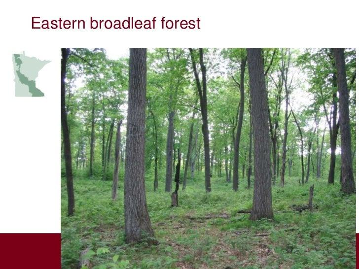 Eastern broadleaf forest          Aspen          Parklands                       Laurentian                       Mixed Fo...