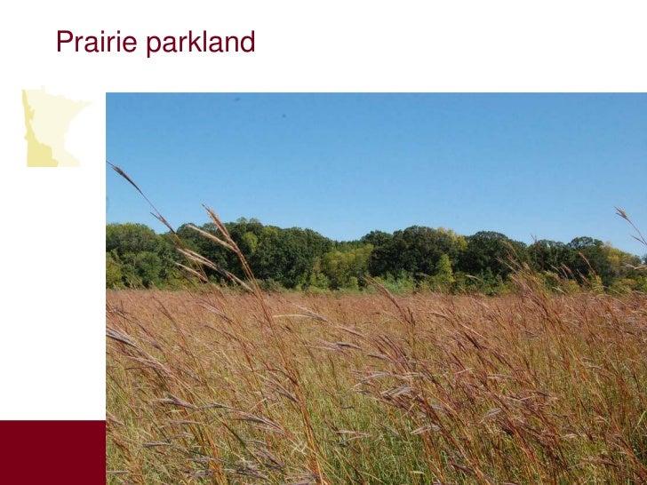 Prairie parkland          Aspen          Parklands                       Laurentian                       Mixed Forest    ...