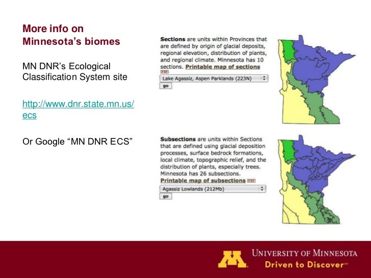 """More info onMinnesota's biomesMN DNR's EcologicalClassification System sitehttp://www.dnr.state.mn.us/ecsOr Google """"MN DNR..."""