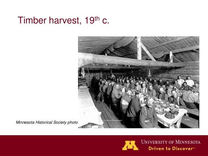 Timber harvest, 19th c.Minnesota Historical Society photo