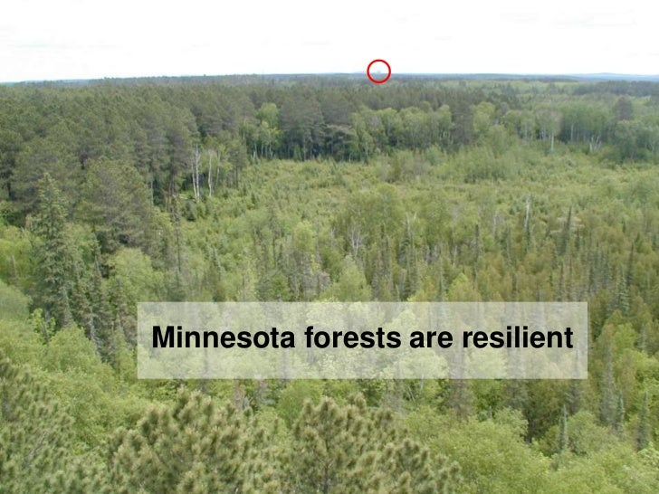 Minnesota forests are resilient