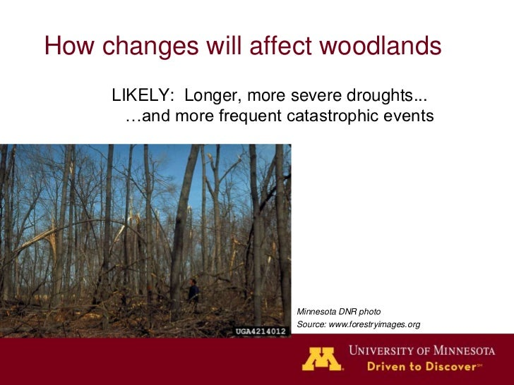 How changes will affect woodlands                      Longer, more severe droughts...                            …and mor...