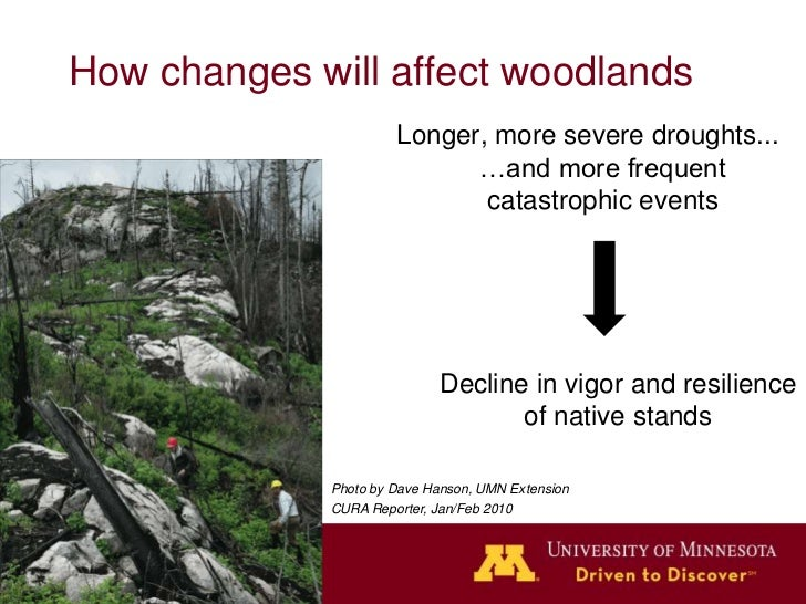 How changes will affect woodlandsDecline in vigor and resilience of           native stands   Lots of new growing spacenot...