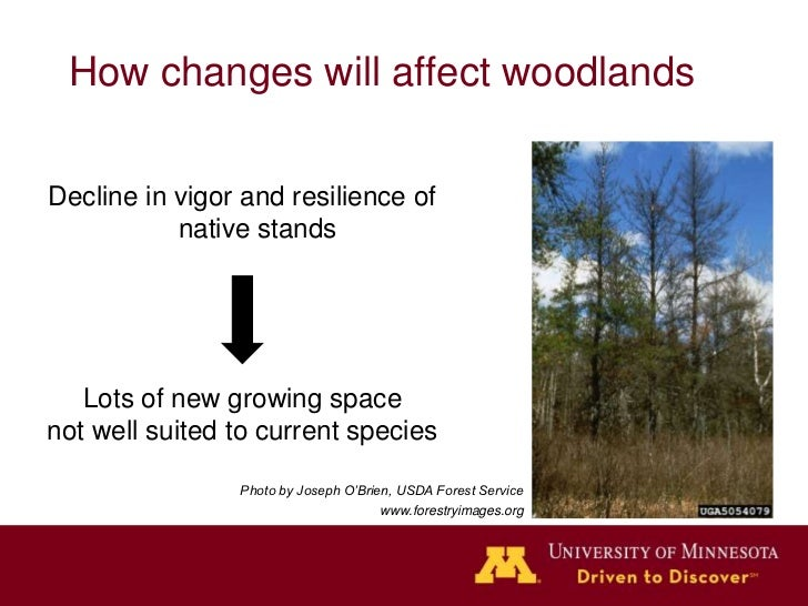How changes will affect woodlands   Lots of new growing spacenot well suited to current species     More invasive species ...