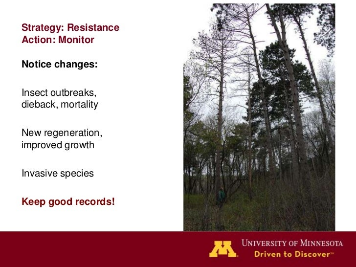 Strategy: Resistance            Action: When you notice            change, act on it!            Deal with insect &       ...
