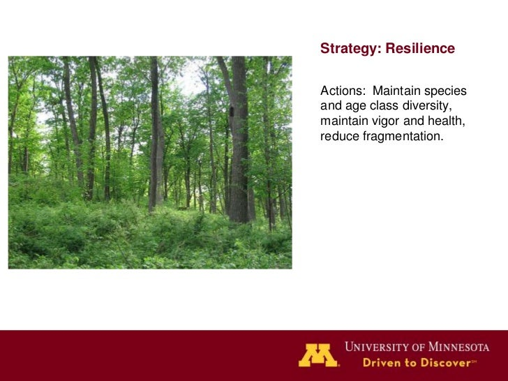 Strategy: ResilienceAction: Thinning &stand improvementThinning your woods