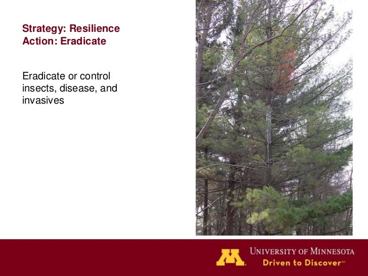 Strategy: ResilienceAction: Diversifyspecies & agesUnderplant from yourproperty or nearby.Maintain variety of ageclasses.