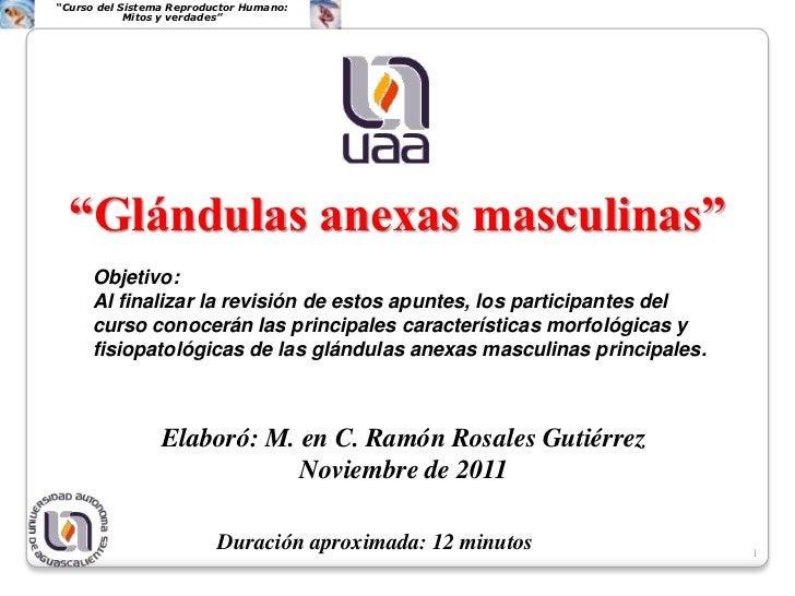 """""""Curso del Sistema Reproductor Humano:            Mitos y verdades""""  """"Glándulas anexas masculinas""""     Objetivo:     Al fi..."""