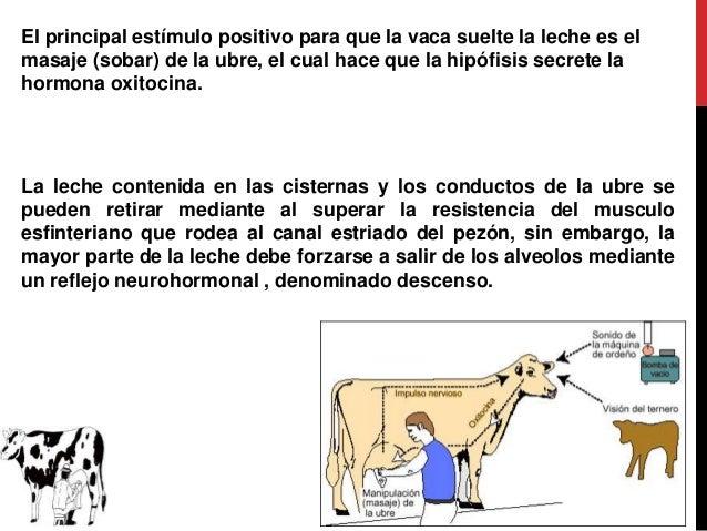 ANATOMIA Y FISIOLOGIA DE LA GLÁNDULA MAMARIA DE ANIMALES DOMESTICOS