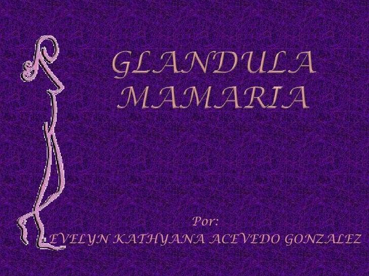 GLANDULA MAMARIA<br />Por:<br />EVELYN KATHYANA ACEVEDO GONZALEZ<br />