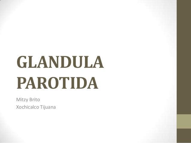GLANDULA PAROTIDA Mitzy Brito Xochicalco Tijuana