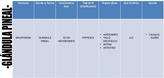 Hormona Donde se forma Característica Gral. Tipo de H (Clasificación) Órgano diana Qué la inhibe función MELATONINA GLÁNDU...