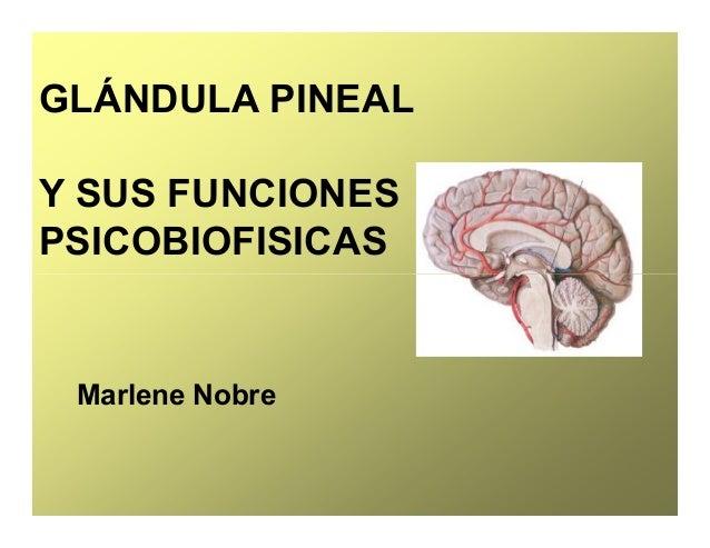 GLÁNDULA PINEAL Y SUS FUNCIONES PSICOBIOFISICAS Marlene Nobre