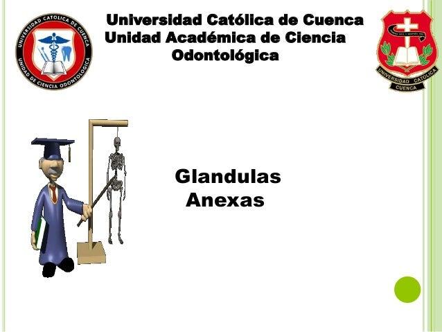 Universidad Católica de Cuenca Unidad Académica de Ciencia Odontológica Glandulas Anexas