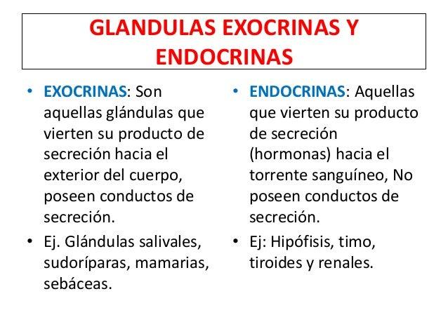 GLANDULAS EXOCRINAS Y ENDOCRINAS • EXOCRINAS: Son aquellas glándulas que vierten su producto de secreción hacia el exterio...