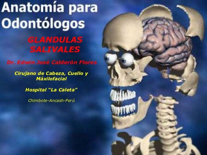 Descripción Anatómica De Las Glandulas Salivales — Vila \