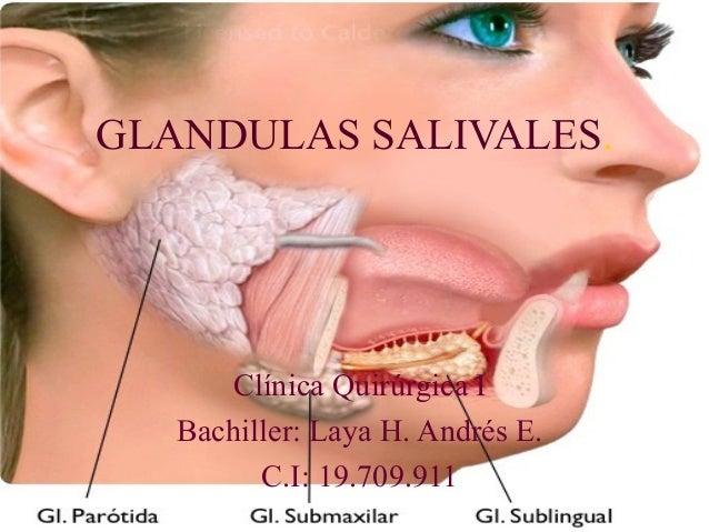 Resultado de imagen de glandulas salivales