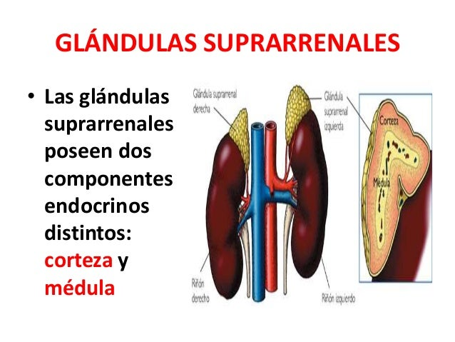 nombres esteroides anabolicos orales