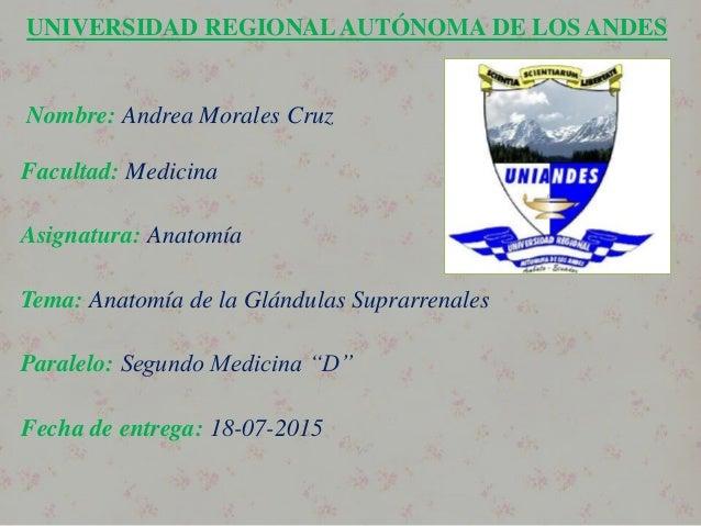 UNIVERSIDAD REGIONALAUTÓNOMA DE LOS ANDES Nombre: Andrea Morales Cruz Facultad: Medicina Asignatura: Anatomía Tema: Anatom...