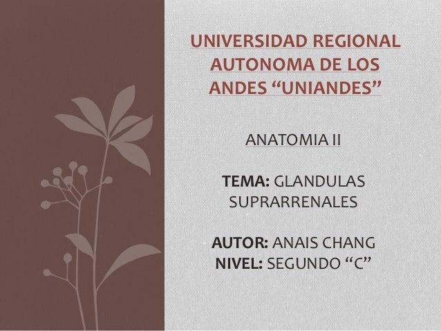 """UNIVERSIDAD REGIONAL AUTONOMA DE LOS ANDES """"UNIANDES"""" ANATOMIA II TEMA: GLANDULAS SUPRARRENALES AUTOR: ANAIS CHANG NIVEL: ..."""