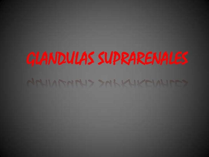 GLANDULAS SUPRARENALES<br />