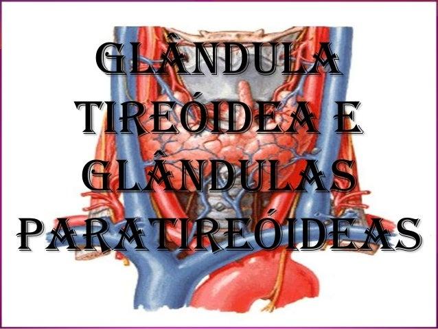 GlândulaTireóidea eglândulasParatireóideas