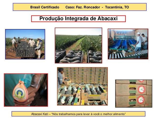 """Produção Integrada de Abacaxi  Abacaxi Kati – """"Nós trabalhamos para levar à você o melhor alimento""""  Brasil Certificado Ca..."""