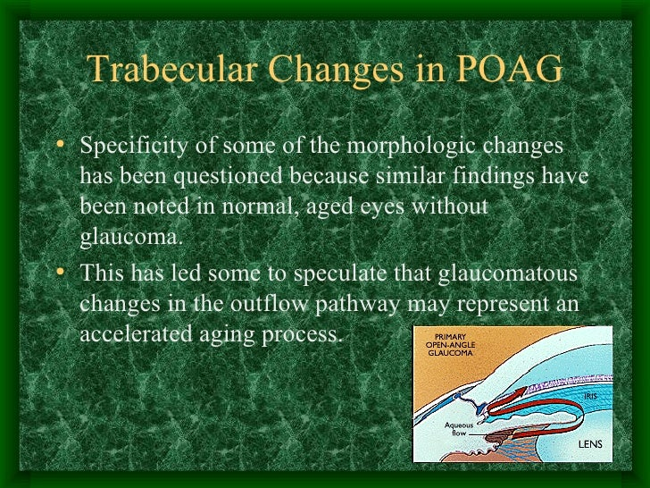Trabecular Changes in POAG <ul><li>Specificity of some of the morphologic changes has been questioned because similar find...