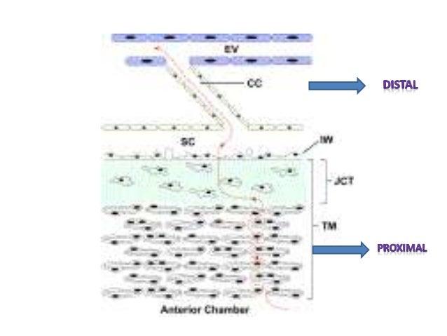 Rho Kinase inhibitor • Rhopressa: IOP lowering – Action 3 cooperative mechanisms • 1. ROCK inhibition: – Increase aqueous ...