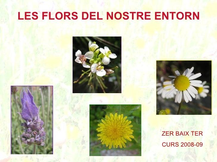 LES FLORS DEL NOSTRE ENTORN                          ZER BAIX TER                      CURS 2008-09