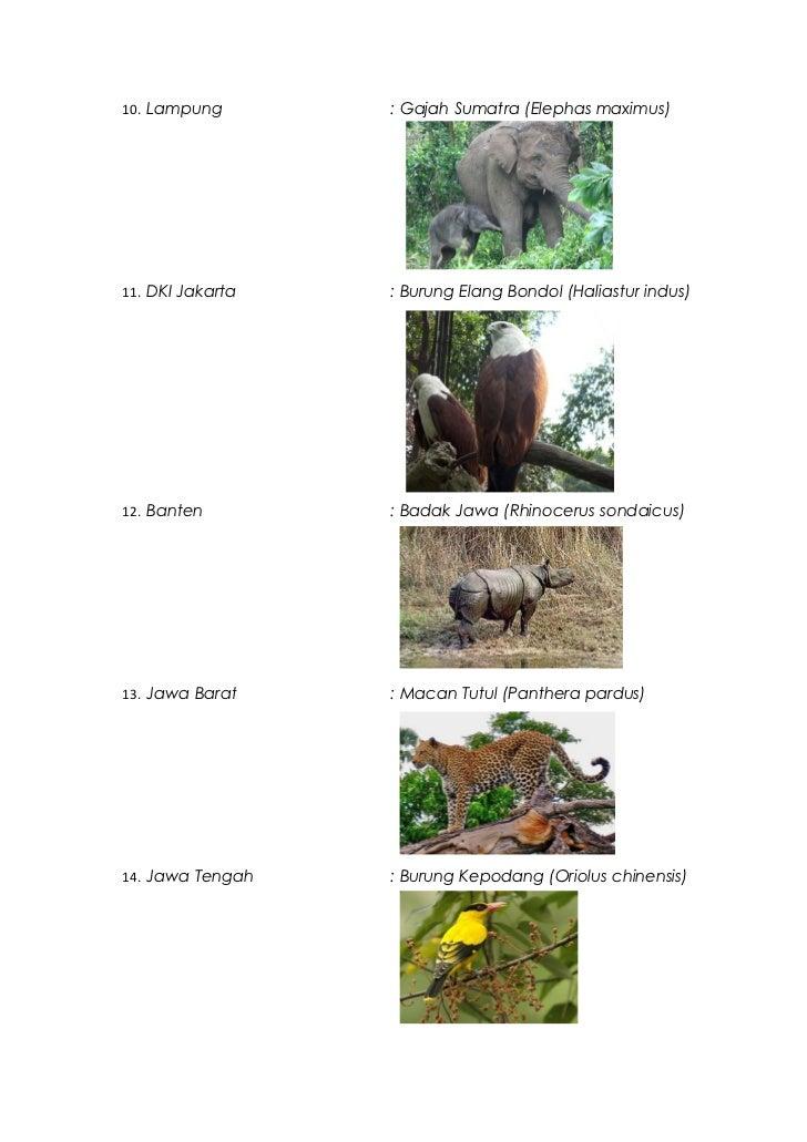 Flora Dan Fauna Maskot Di Indonesia