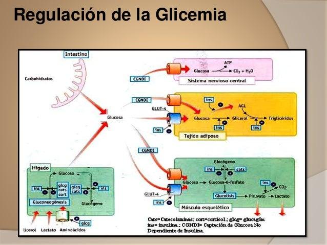 Glicemia.