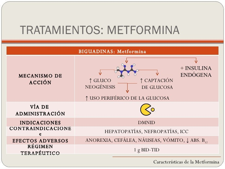 Planta Metformina | Holidays OO