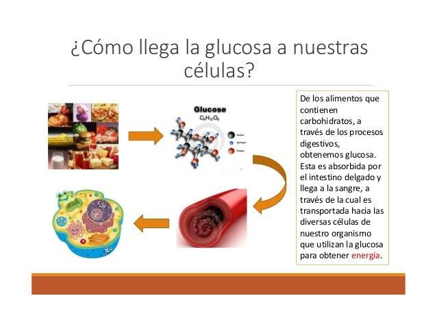 Glicemia isidora