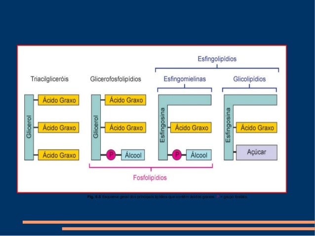 Estrutura De Glicídios E Lipídios