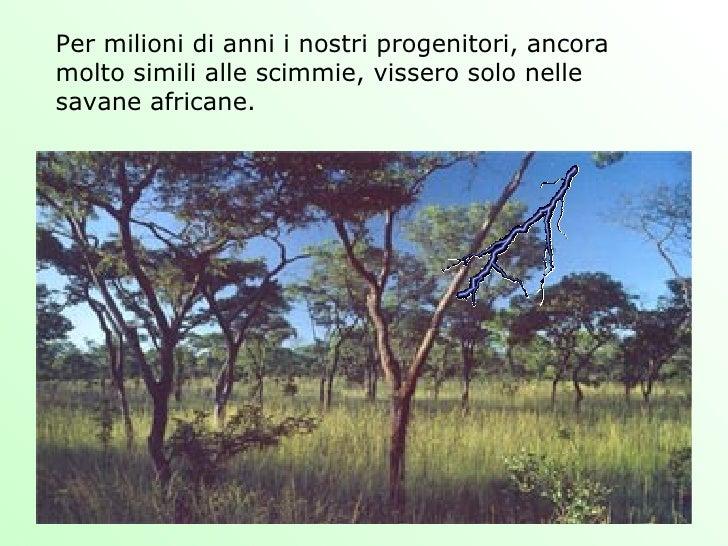 Per milioni di anni i nostri progenitori, ancora molto simili alle scimmie, vissero solo nelle savane africane.