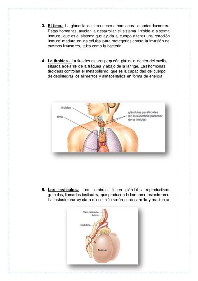Glándula endocrinas y exocrinas