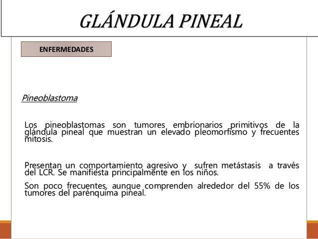 Histologia de la Glándula pineal