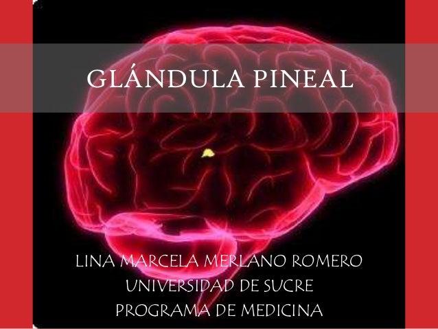 GLÁNDULA PINEAL  LINA MARCELA MERLANO ROMERO UNIVERSIDAD DE SUCRE PROGRAMA DE MEDICINA