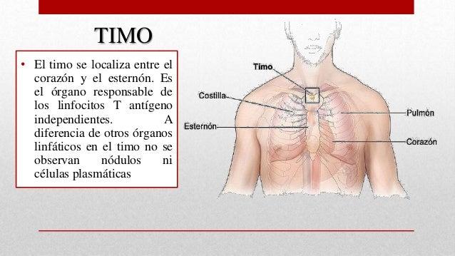EL PÁNCREAS,TIMO Y SUPRERRENALES