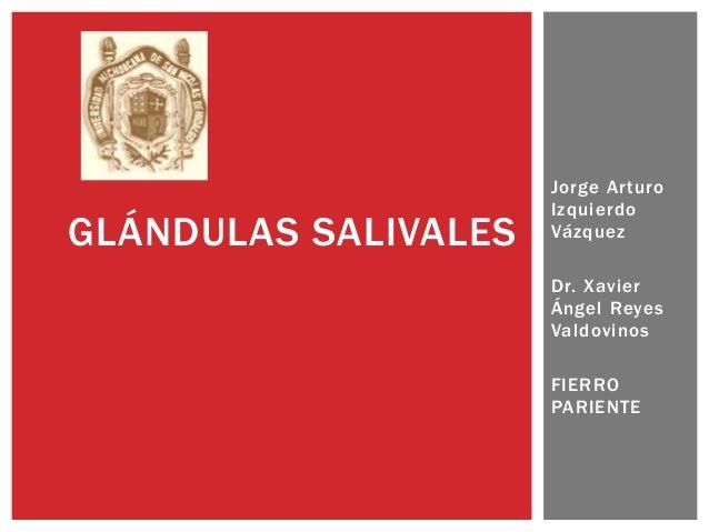 GLÁNDULAS SALIVALES  Jorge Arturo Izquierdo Vázquez Dr. Xavier Ángel Reyes Valdovinos FIERRO PARIENTE