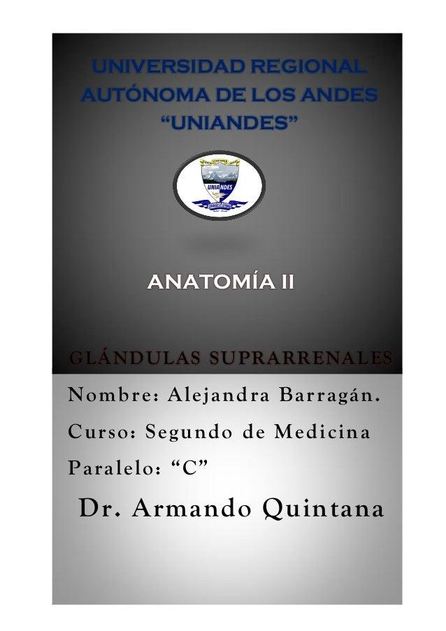 "GLÁNDULAS SUPRARRENALES Nombre: Alejandra Barragán. Curso: Segundo de Medicina Paralelo: ""C"" Dr. Armando Quintana UNIVERSI..."